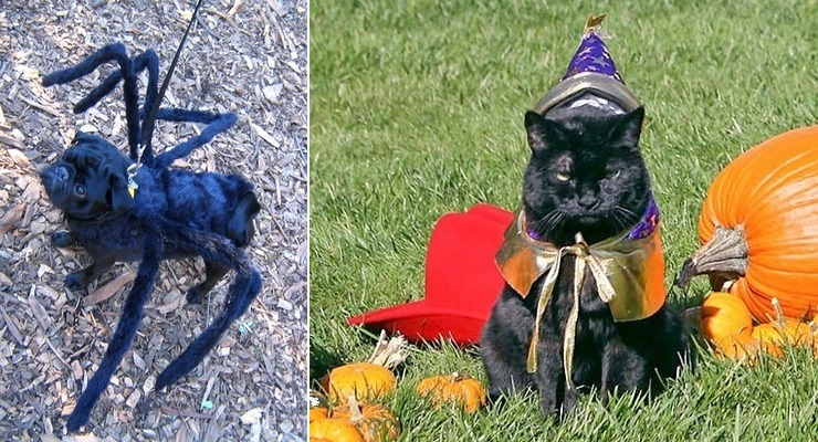 Create These D.I.Y Halloween Pet Costumes, Join Sunday's Pet Parade