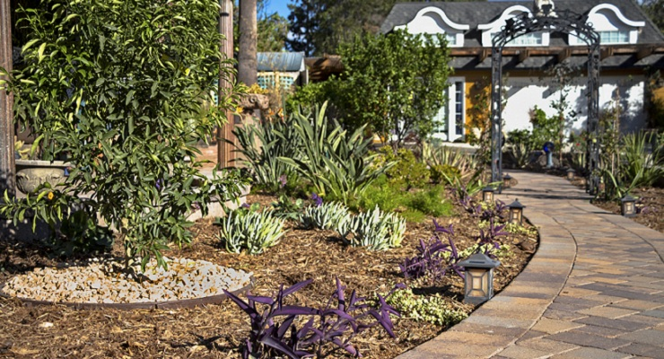Yes, You can Have a Beautiful Yard in a Drought