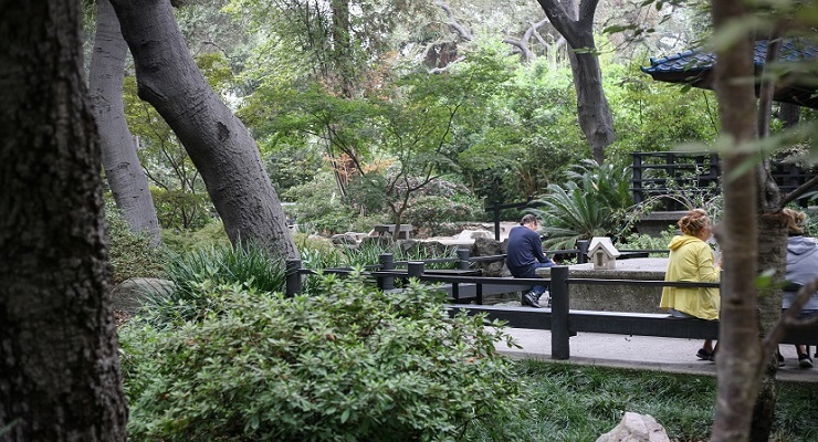 Sharing Cultures | Creating Community Opens at Descanso Gardens