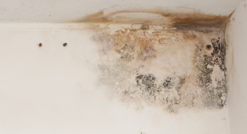 Do you have a mold problem