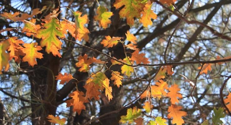 Autumn Comes to Descanso Gardens