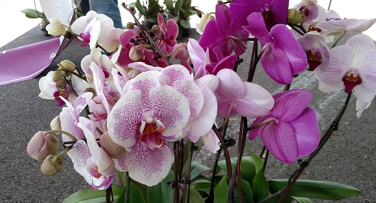 Tips on How to Take Care of those Orchids