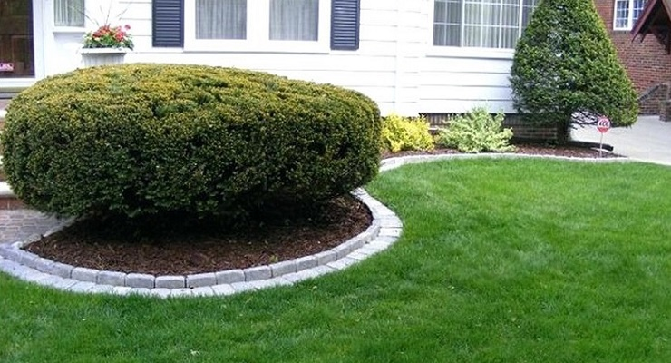 How to Build a Decorative Tree Border