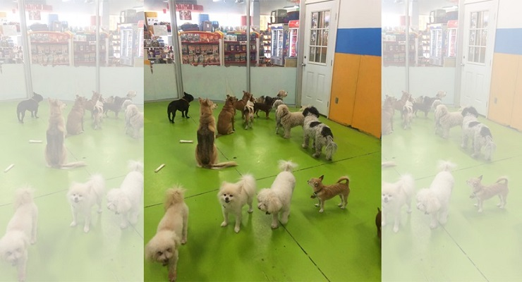 Looking for a Great Pet Shop in Pasadena?