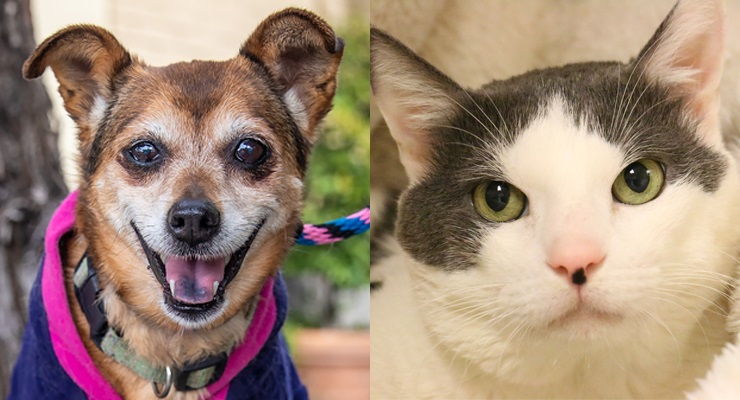 Pets of the Week at the Pasadena Humane Society
