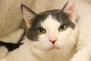 Patches (A470134)