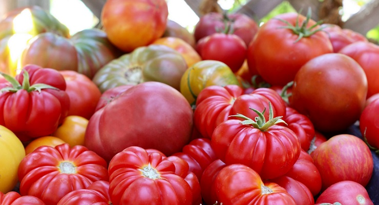 Tomatomania 2019 Returns to Descanso Gardens March 29-31