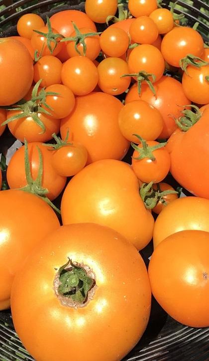 Tomatomania7