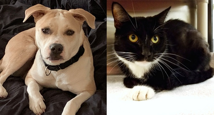 Pets of the Week at the Pasadena Humane Society